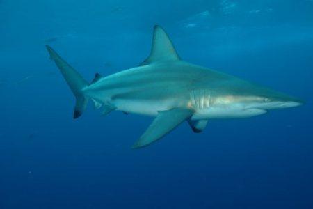 Shark attack during the Sardine Run | JBAY News